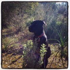 Blacky disfrutando de un n día soleado, anticipando la primavera #blackdog