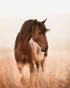 Most Beautiful Horses, All The Pretty Horses, Animals Beautiful, Cute Animals, Beautiful Horse Pictures, Cute Horses, Horse Love, Cavalo Wallpaper, Horse Wallpaper