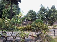 The ⛲ Intramuros, Plants, Flora, Plant