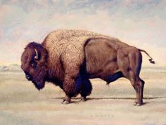 American Buffalo, oil on canvas board. Painted in Cross Plains, Texas, (The Schools Mascot) Buffalo S, Buffalo Animal, American Bison, Native American Art, Galactik Football, Buffalo Pictures, Buffalo Painting, Country Paintings, Fauna