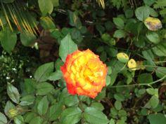 Flor 5