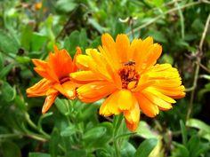 Naturaleza con flor creciendo