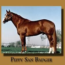 Peppy San Badger all my great barrel horses