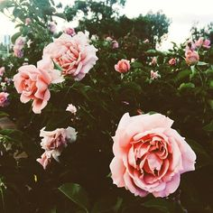pretty flowers #life #style