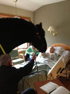 """From one Madison Mounted Patrol agent to another:  """"Bubba""""  welcomes Sgt. Krahn to her room at hospice!  ...and after a handshake, """"Bubba"""" offers a kiss hello.  From Friends of Madison Mounted Horse Patrol on Facebook.  https://www.facebook.com/madisonmounted?ref=stream"""