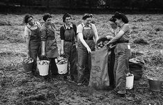 Land Army members are pictured packing potatoes at Bacheiddon Farm, near Machynlleth, July WWII Ww2 Women, Military Women, Women's Land Army, Female Farmer, Land Girls, Hometown Heroes, Women In History, British History, Vintage Farm