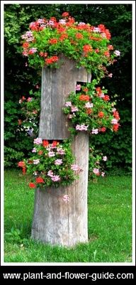 Instead of completely cutting down a sick or dead tree, leave 6 or 7 feet standing & turn it into a hanger for plants. This one is displaying Ivy Geraniums. Lawn And Garden, Garden Art, Beautiful Gardens, Beautiful Flowers, Ivy Geraniums, Tree Stump Planter, Log Planter, Vertical Planter, Pot Jardin