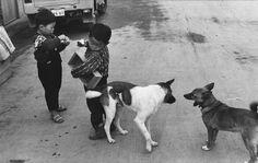 Henri Cartier-Bresson, Boys and Dogs | ClampArt
