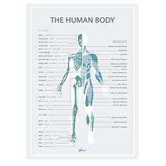 The Human Body skeleton and Muscles. By Wondermade Fabric Decals Human Body Bones, Muscle Body, Kids Wall Decals, Biceps, Skeleton, Muscles, Boys, Girls, Minimalist