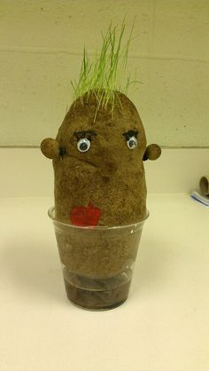 A potato head. U will need old nylons or knee highs, grass seed, sawdust, tiny rubber bands, paint, eyes  drop some grass seed in nylon first fill with sawdust to the size head u want leave room to tie the bottom tie it the pinch on one side and twist for ear put rubber band around it to hold it do the same for other ear and nose paint on mouth and eyebrows glue on eyes. Mist with water and grass will grow for hair looks just like a potato  Karries class made these for the fair very cool.