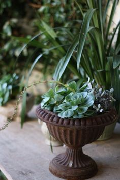 Iron urns and succulents