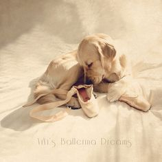 ViVi's Ballerina Dreams: Trying On Pointe Shoes | Flickr - Photo Sharing!