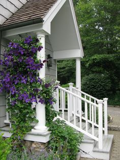 Purple clematis softens side door entrance, Westport, CT... I would love to let mine climb up like this to create a privacy screen...