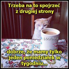 Poniedziałek rano...śmieszne memy z kotem, wesołe obrazki, tak wyglądam poniedziałek rano, rysunkowe anegdoty o pracy po weekendzie, fajne demotywatory - kliknij po więcej!