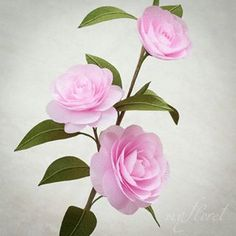 My floret ( Paper Art, Paper Crafts, Crepe Paper Flowers, Camellia, Pink Flowers, My Etsy Shop, Photo And Video, Rose, Plants
