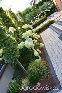 Hydrangea Landscaping, Privacy Landscaping, Small Backyard Landscaping, Modern Landscape Design, Garden Landscape Design, Amazing Gardens, Beautiful Gardens, Succulents Garden, Clematis