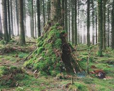 Inviting forest shelter...for gnome or bear?! http://ohpioneer.com/post/97912249592