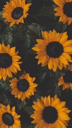 Iphone Wallpaper Herbst, Sunflower Iphone Wallpaper, Iphone Wallpaper Vsco, Flower Phone Wallpaper, Homescreen Wallpaper, Fall Wallpaper, Iphone Background Wallpaper, Nature Wallpaper, Galaxy Wallpaper
