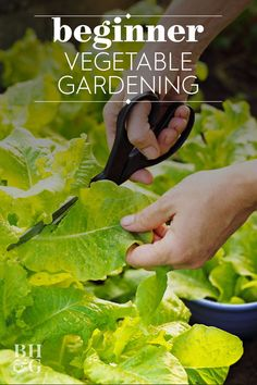 1066 Best Grow Your Own Produce Images In 2020 Growing
