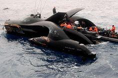 Featured Org | Sea Sheperd