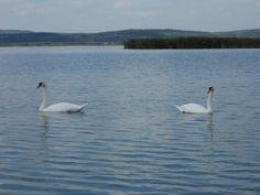 Lake Animals, Animales, Animaux, Animal, Animais