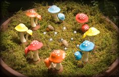 Don't step in a fairy ring!! HiddenWorlds