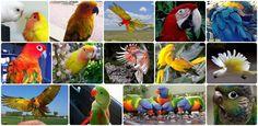 parrots lovely