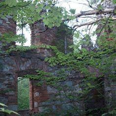Kudy z nudy - Zřícenina kláštera ve Světcích Plants, Plant, Planting, Planets