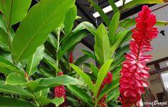 Adubar é a reposição dos nutrientes retirados do solo pelas plantas para o crescimento, floração, frutificação e a multiplicação. As adubações são feitas ..