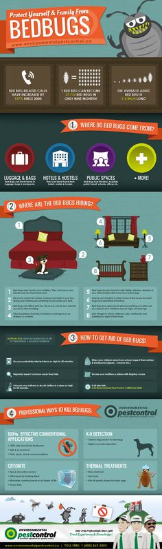 Bed Bugs- Protect Yourself and Your Family!  This Infographic depicts the life cycle of a Bed Bug, how fast they re-produce, and common areas in your h