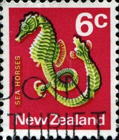 New Zealand 1970 SG 921 Sea Horse Fish Fine Mint SG 921 Scott 445 Condition Fine MNH Only one post charge applied on multipule purchases Details N B Sea Dragon, Kiwiana, Stamp Printing, Tampons, Fauna, Stamp Collecting, Mail Art, Little Pony, Postage Stamps