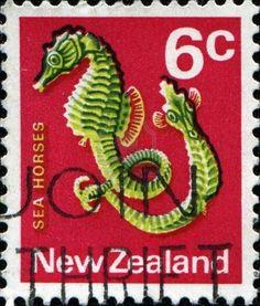 Seahorses, New Zealand, 1970s