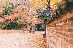 Changdeokgung Palace - Secret Garden, Autumn in Korea Secret Garden Korean, Learn To Speak Korean, Autumn In Korea, Aesthetic Korea, Yellow Tree, Jeju Island, Hidden Beach, Fall Photos, Travel Couple