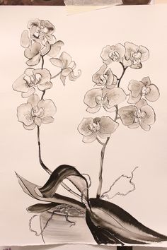Orchids in inks and washes at a Kirsty Lorenz Art Workshop
