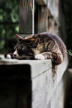 De tout et de rien... | 89cats:   neko-nekoSZS-18 by kuro-gin on Flickr.
