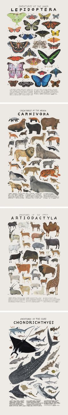 Playful Watercolors Illustrate the Many Classifications of the Animal Kingdom