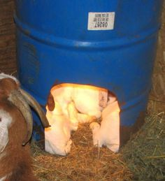 1000 Images About Goat Stuff On Pinterest Hay Feeder Goats And Goat Shelter
