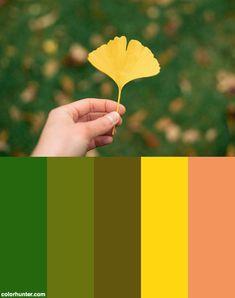 Ginkgo Tree Leaf Color Scheme from colorhunter.com