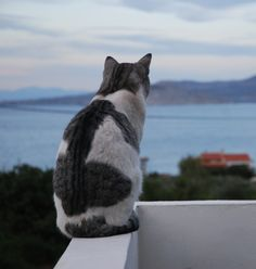 778:  the old cat and the sea (via offroadsound)