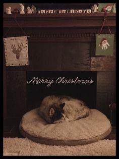 Merry Christmas #husky