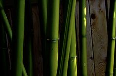Bamboo #5 by Talia M. Wilson on 500px