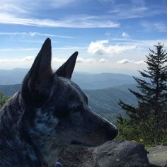 Browse the free Gatlinburg Vacation Guide to find pet-friendly accommodations in Gatlinburg.