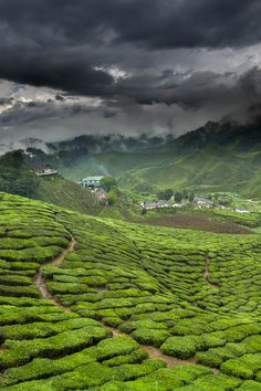 """expressions-of-nature: """" Green Tea Factory / Cameron Highlands, Malaysia By : Jeffrey Groeneweg """""""