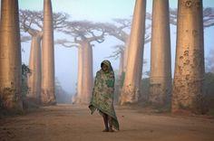 La race humaine en 24 photos poignantes Une fillette malgache au milieu des arbres Boabab.
