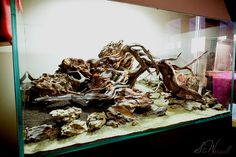 Setup of my new aquascape made from 30Kg of Dragon Stone, Power Sand, ADA Nile…