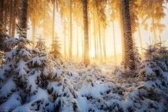 Early Winter's Magnificence by MaximeCourty on DeviantArt