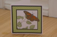 Beautiful Butterfly by mayodino - Cards and Paper Crafts at Splitcoaststampers