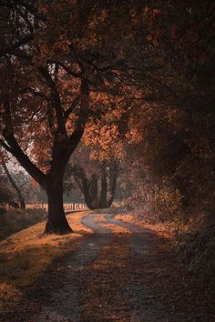 Like: seasonskeeper - Halloween Fondos Autumn Aesthetic, Autumn Cozy, Seasons Of The Year, All Nature, Autumn Nature, Autumn Forest, Pathways, Countryside, Nature Photography