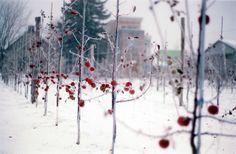 La Face Cachée de la Pomme, à l'origine du magnifique cidre de glace Neige. Destination rêvée...
