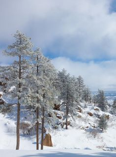 Fresh Snow by  Mike Hendren - More at http://500px.com/m33photo (✮ Winter Scene: Thx Doreen)